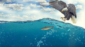 Ressources marines La pêche française doit encore s'améliorer